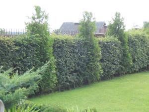 Дачный участок озеленение