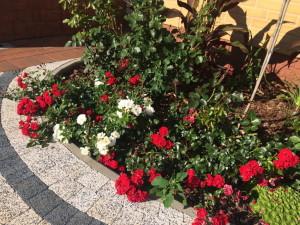 Цветы перед усадьбой