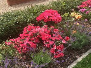 Цветы на участке фото